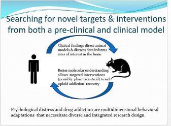dissertation slide